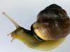 uge_26_snail2