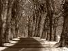Uge_14_Old_road